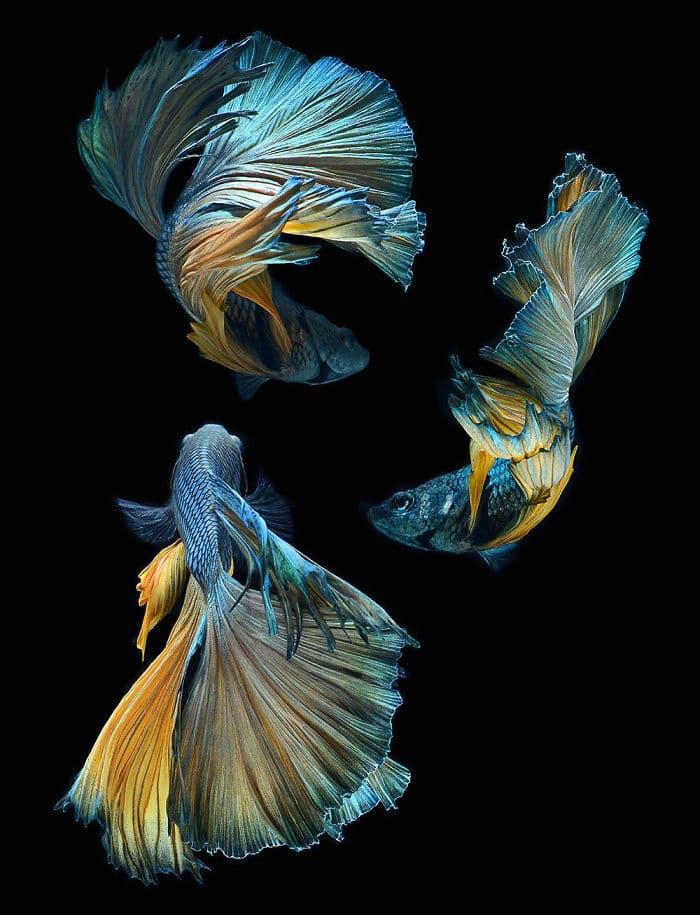 рыбки красивые фото