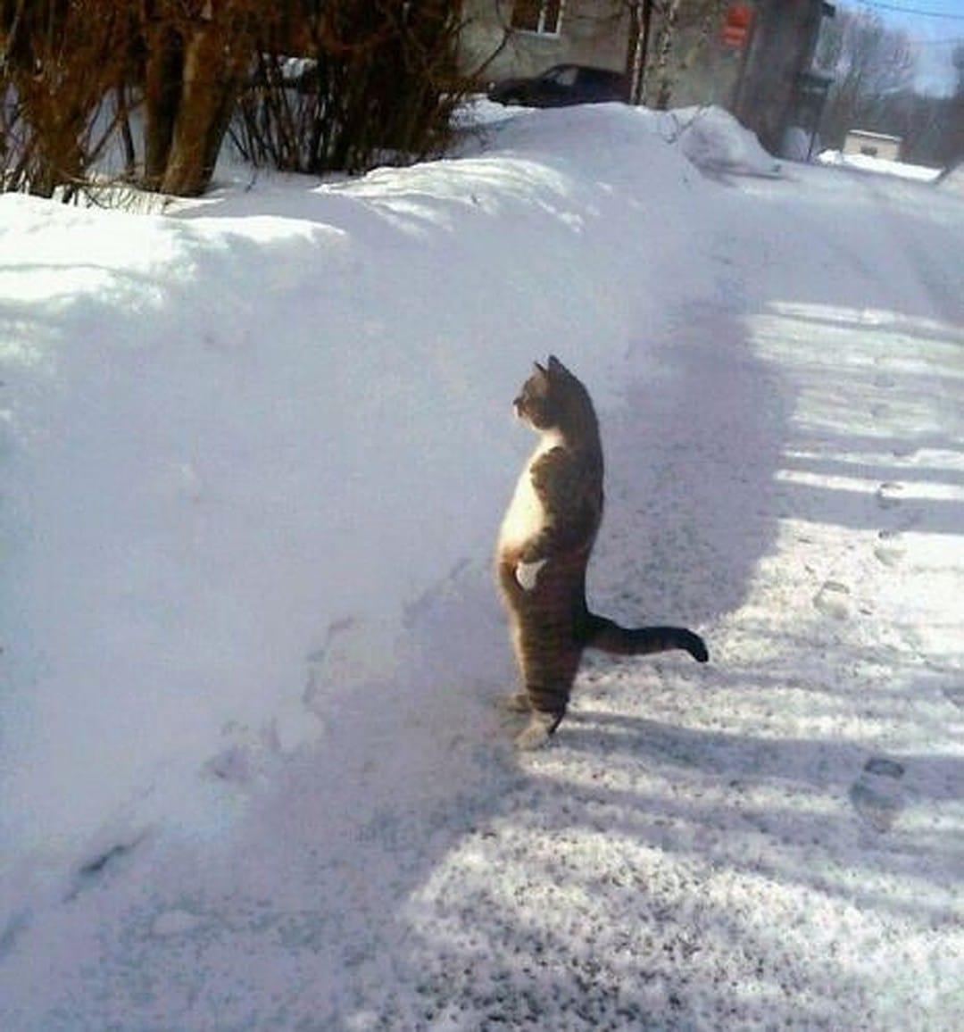 кот стоит на задних лапах