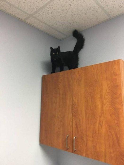 черный кот на шкафу