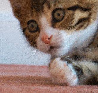 котенок закрывает лапкой рот