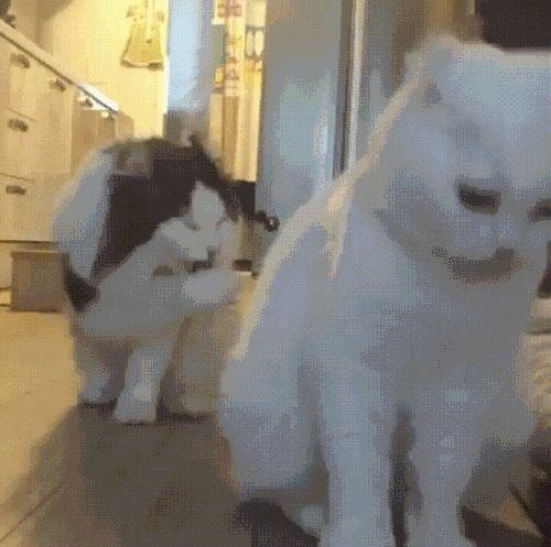 коты умываются