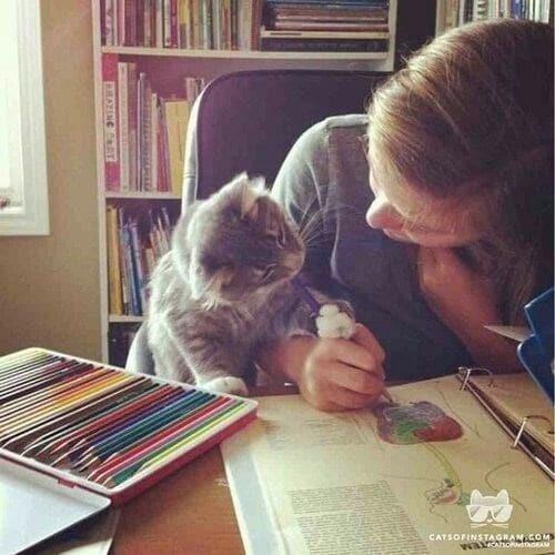 кот и девушка за столом