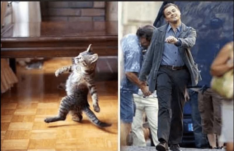 шагающий кот и Леонардо ди Каприо