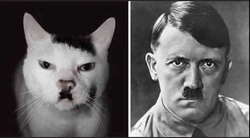 кот и гитлер