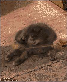 кот становится на задние лапы