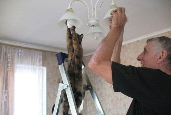 кот и мужчина выкручивают лампочки