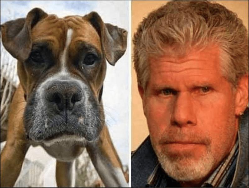 собака и Рон Перлман