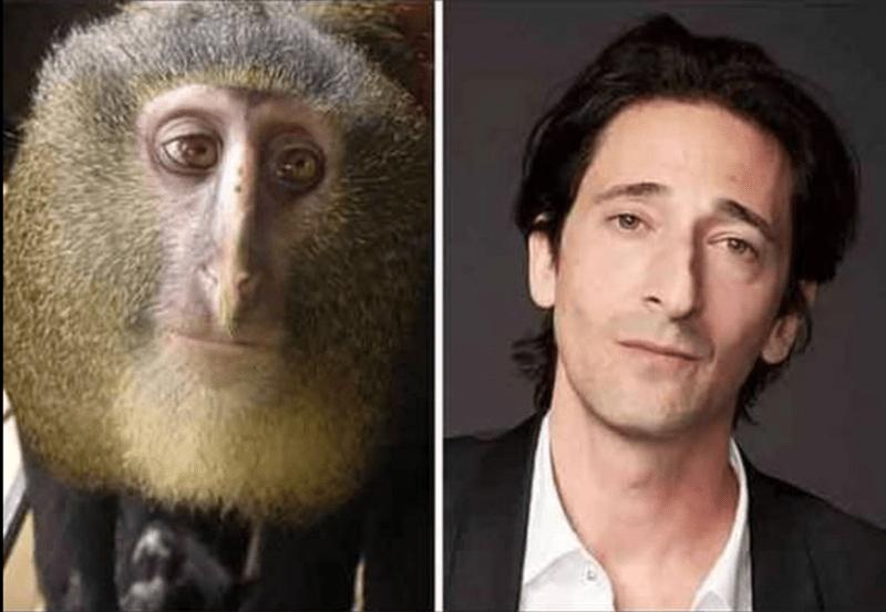 обезьяна и эдриэн броуди