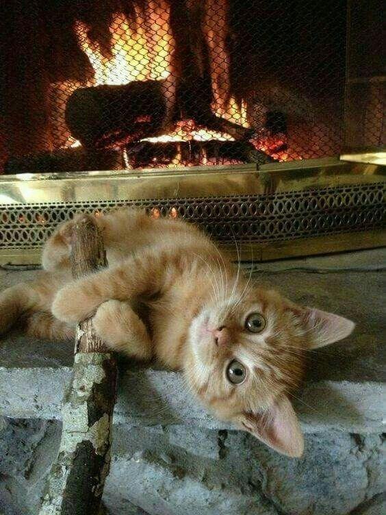 рыжий кот у камина