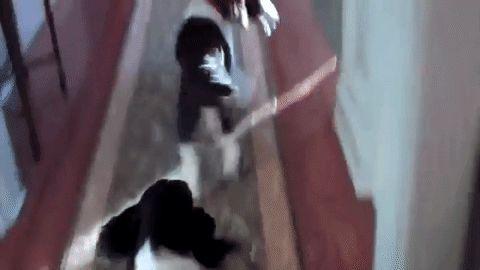 черно-белые собаки кружатся