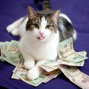 кот с деньгами