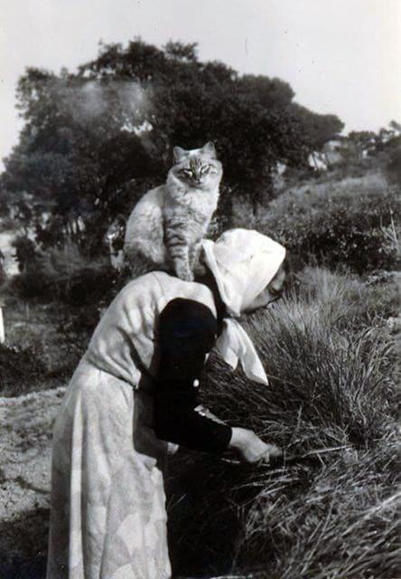 кот сидит на спине у женщины