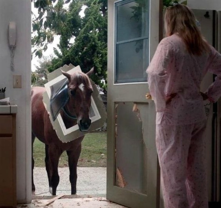лошадь на пороге дома