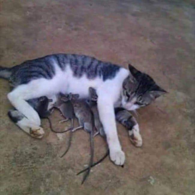 кошка с мышами