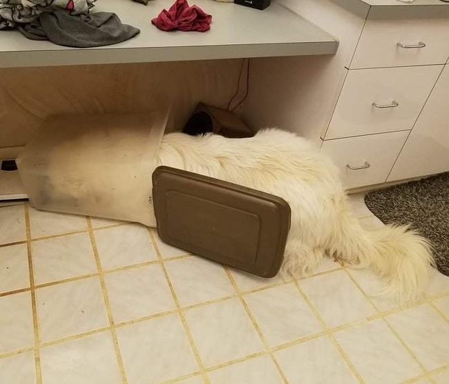 собака спит в мусорном ведре