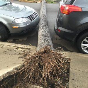 дерево упало между машинами