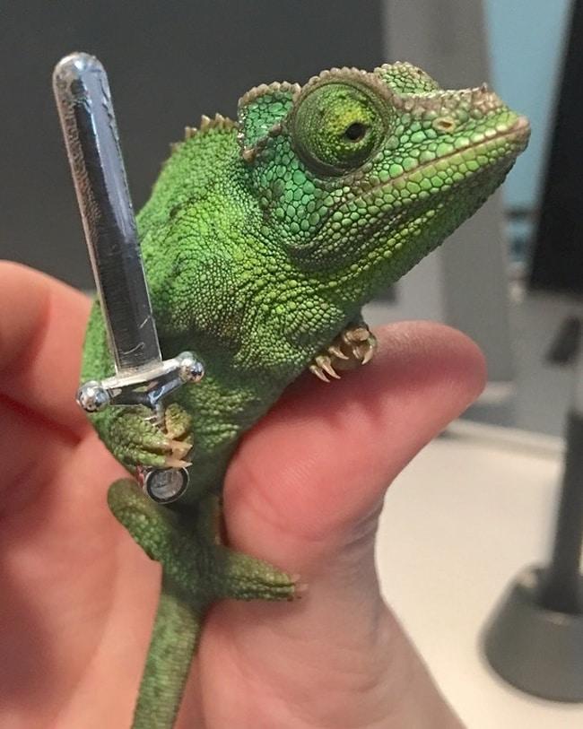 хамелеон с мечом