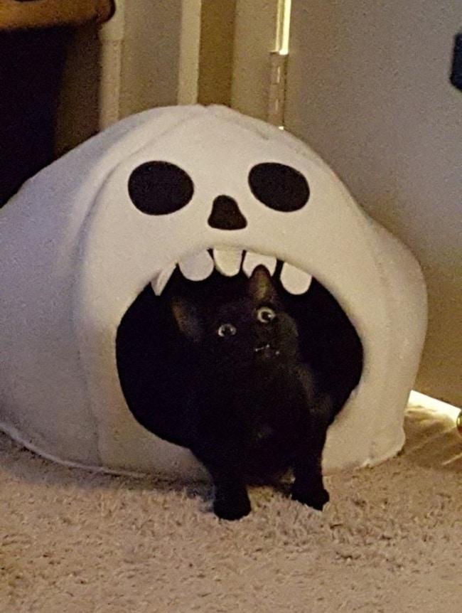 черный кот в палатке