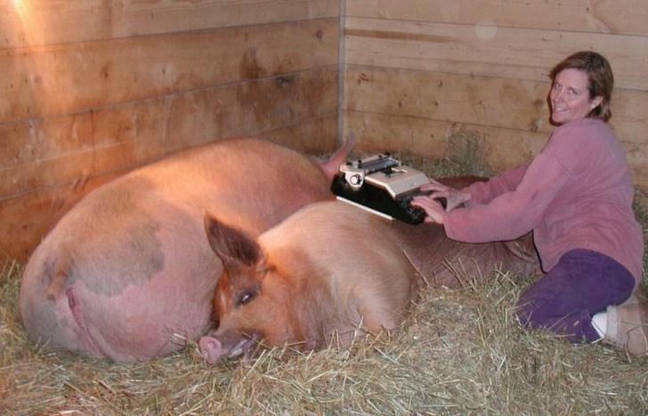 девушка и свиньи