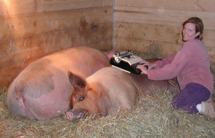 свинья в свинарнике