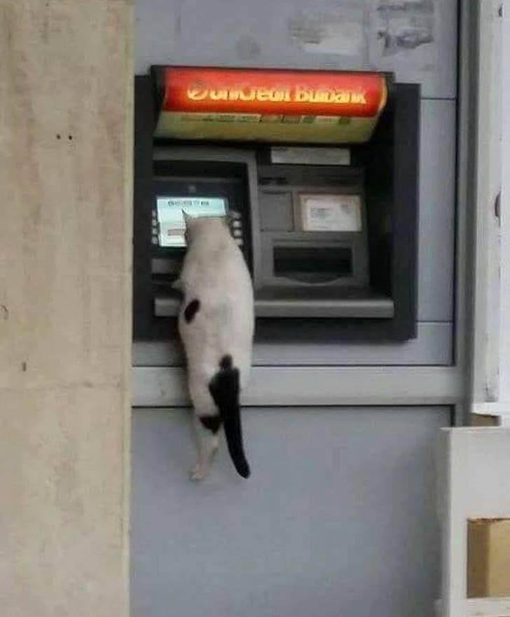 кот в банкомате