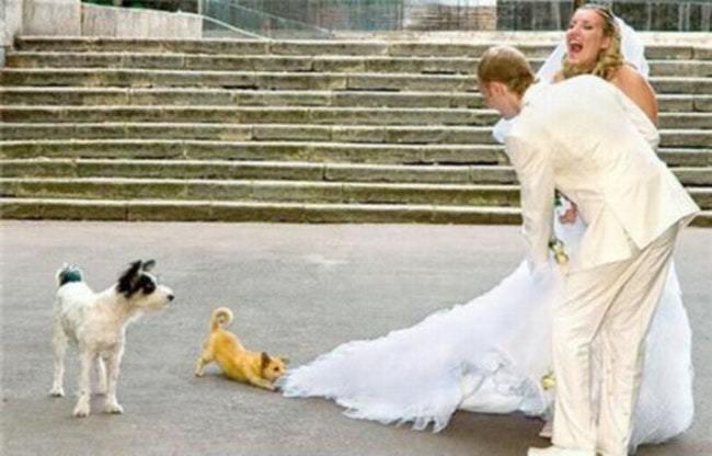 собаки и жених с невестой