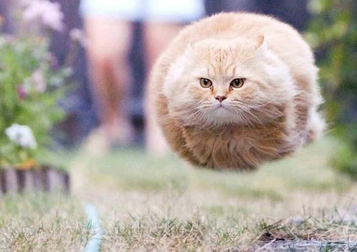 кот в полете