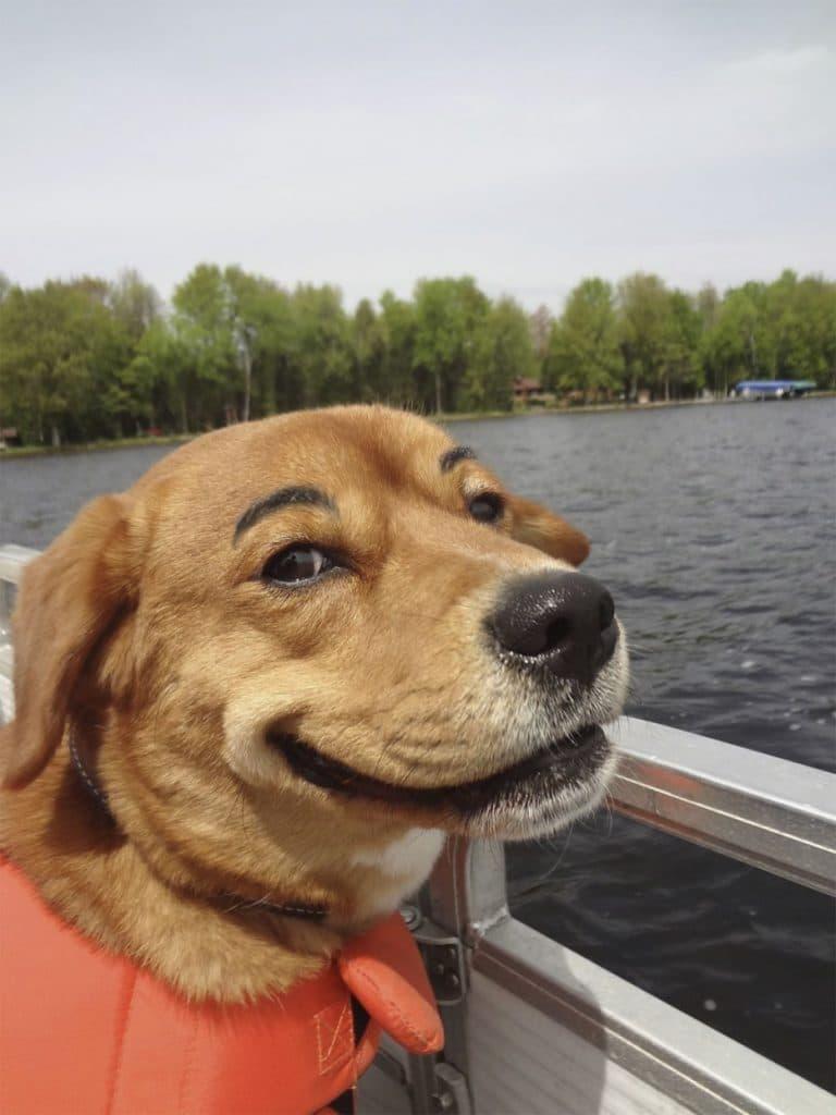 рыжая собака с бровями