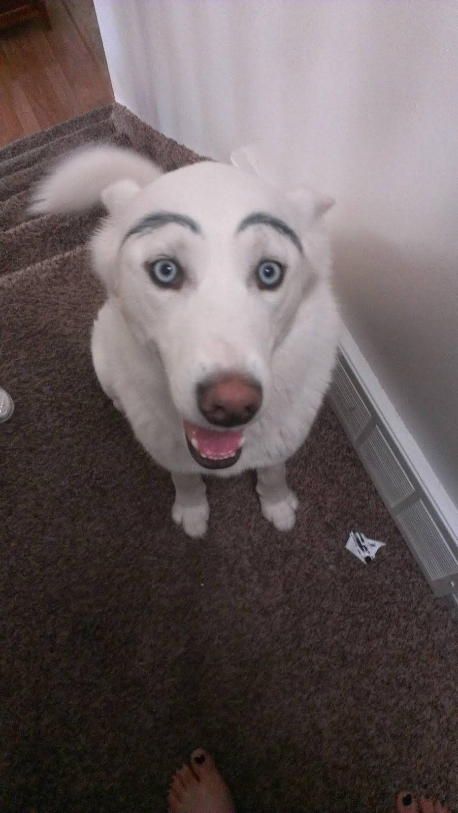 белая собака с бровями