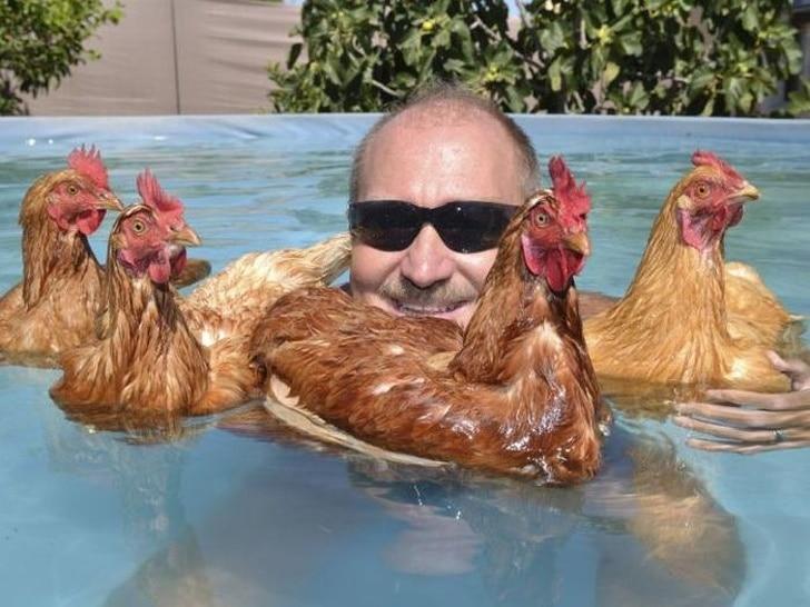 куры в бассейне