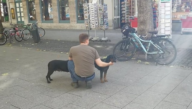 длинная собака