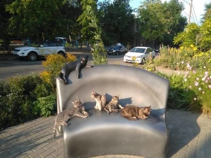 коты на лавке