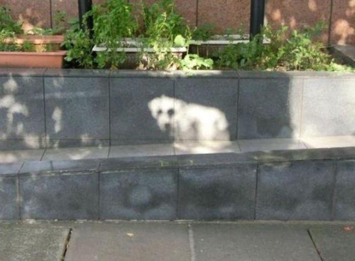 тень собаки