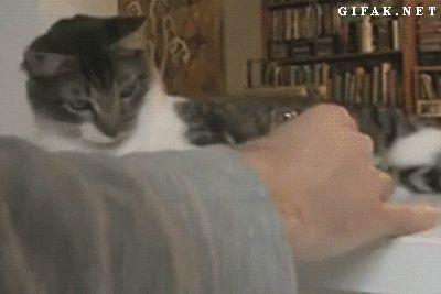 кот сбрасывает на пол вещи