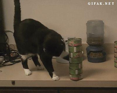 черный кот сбрасывает со стола консервы