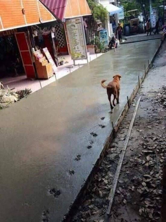 собака идет по свежему бетону