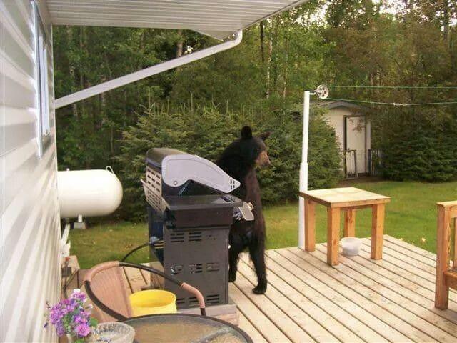 медведь на веранде дома
