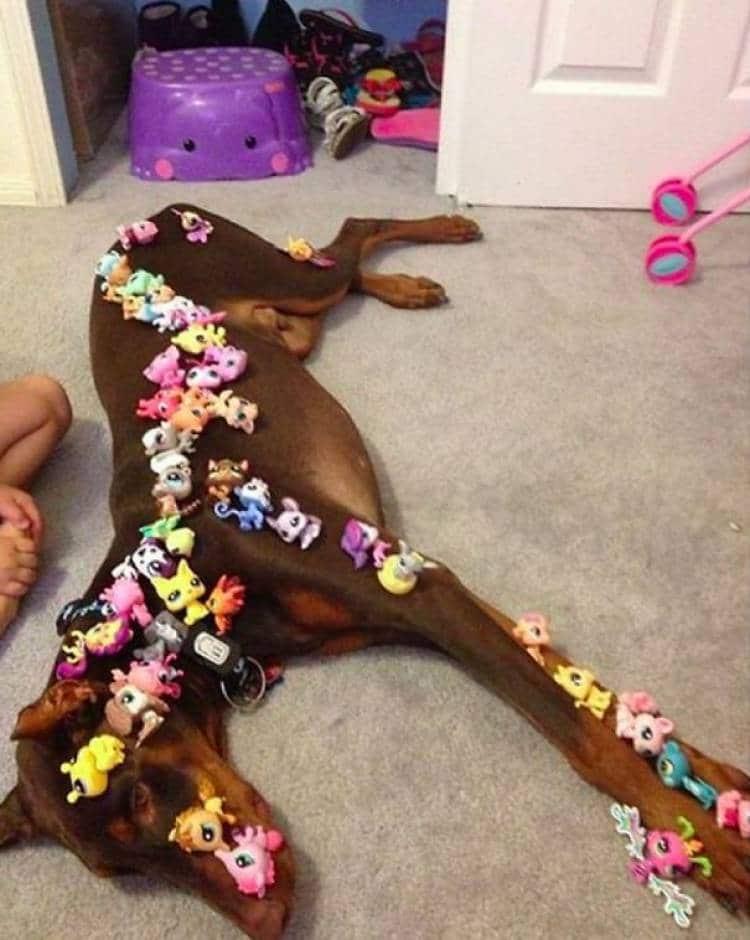 игрушки на собаке
