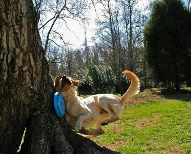 собака с фрисби
