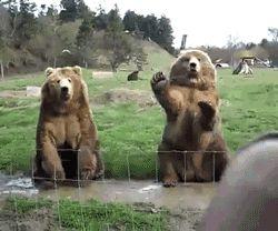 медведи машут лапой