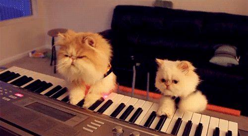коты играют на пианино
