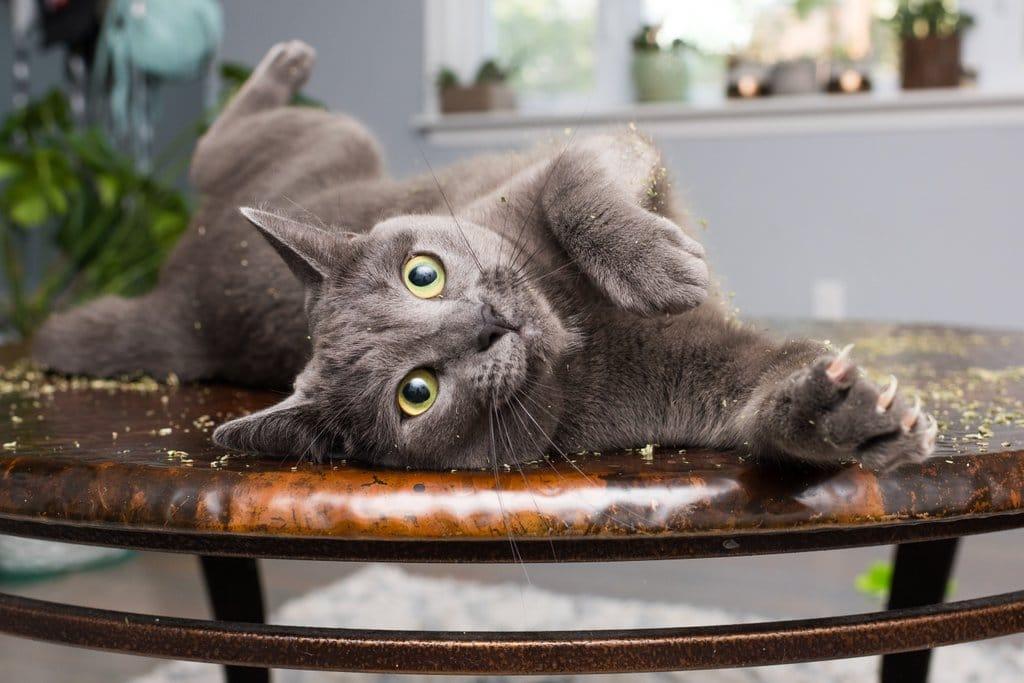 коты, коты фото, коты приколы
