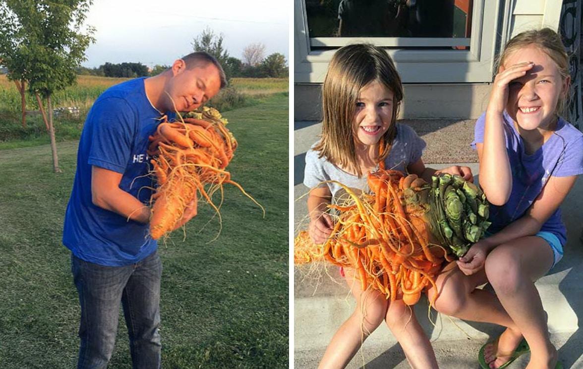 фермер держит большую морковь, рекорд Гиннесса