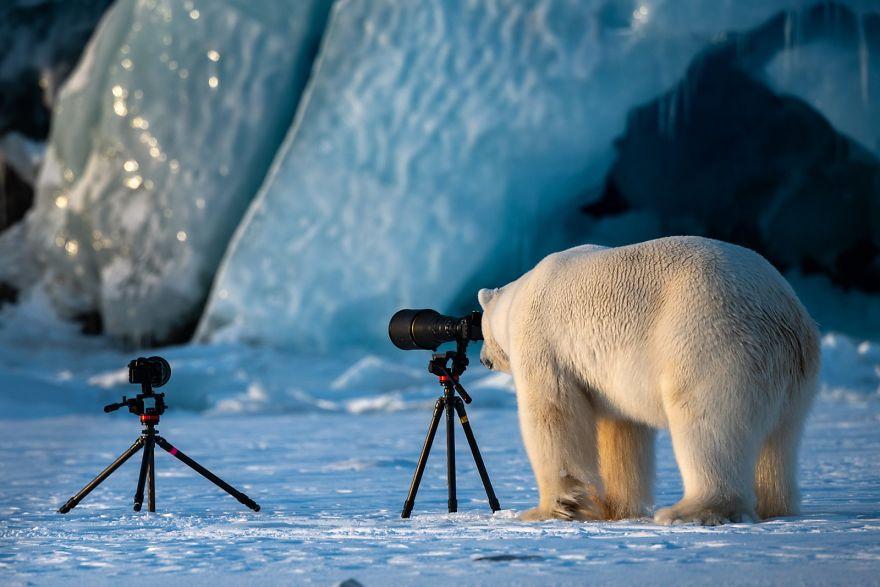 белый медведь и фототехника