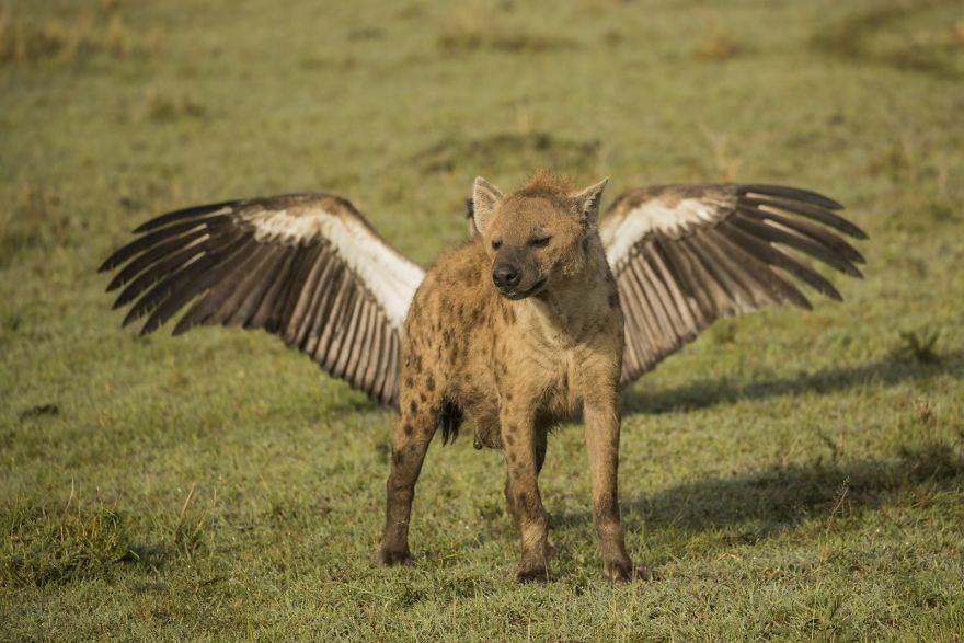 смешной снимок животных