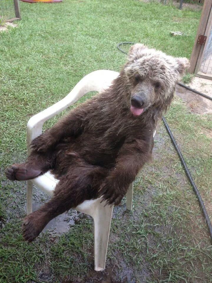 медведь сидит на стуле
