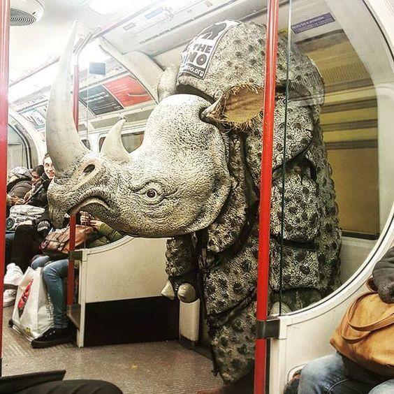 носорог в метро