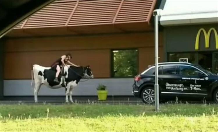 девушка верхом на корове