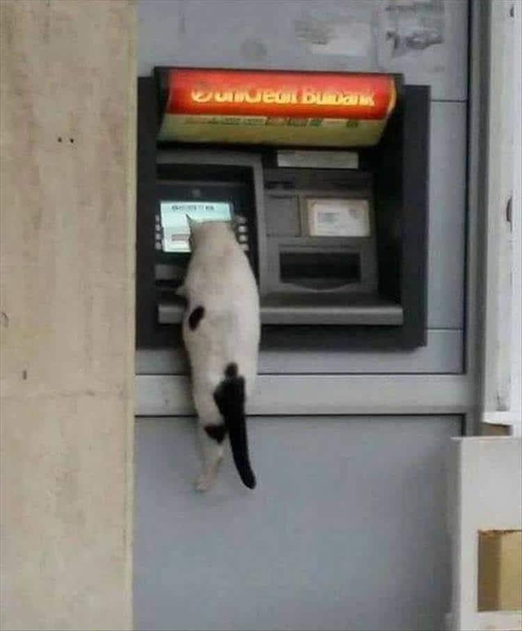 кот сидит на банкомате