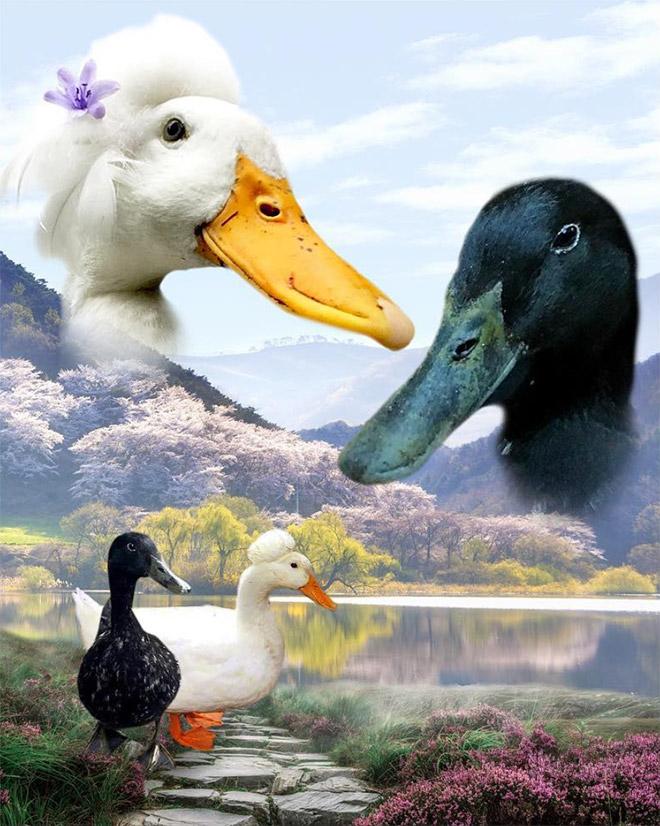портрет гусей